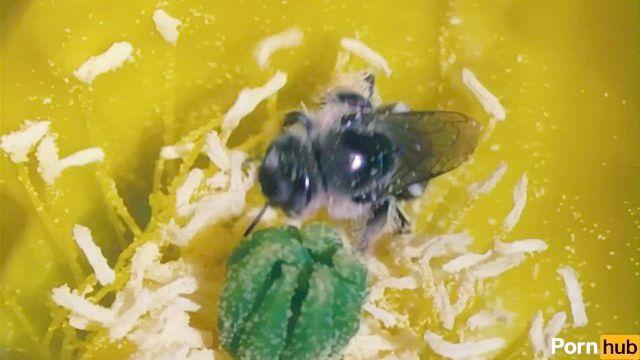 squirter pólen fica invadida por explorer exótico